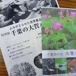 千葉市郷土博物館でも企画展が開かれます