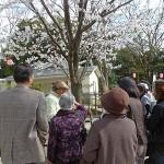 亥鼻公園の桜が満開です