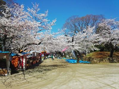 千葉城さくら祭り概要