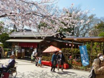 千葉城「さくら祭り」
