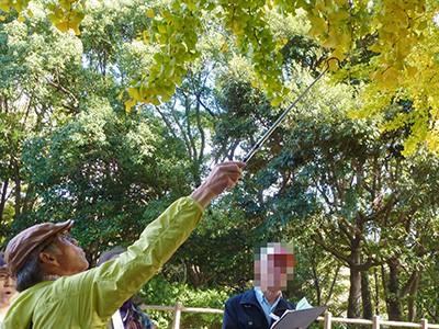 高木を巡る